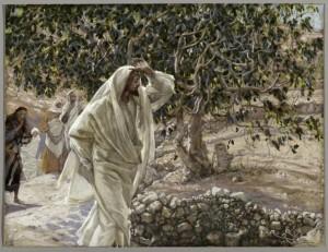 jesus-figtree