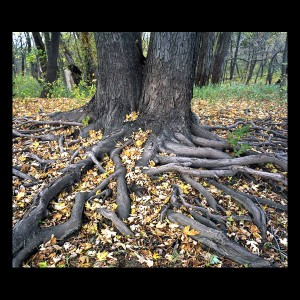 tree-roots-with-leaves_01